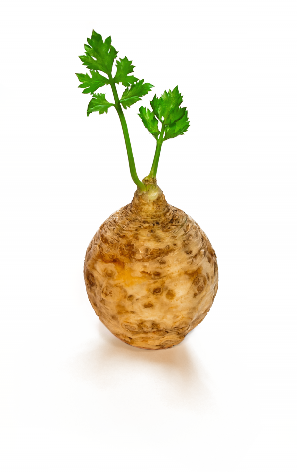 celery-1205701