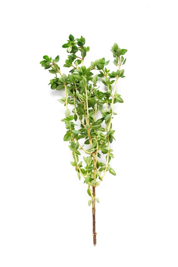 Herbs Series – Thyme